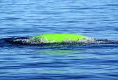 Kayak upside down in water — Stock Photo
