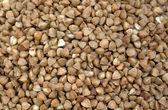 Buckwheat close up — Stock Photo