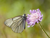 The macro of butterfly on the flower — Foto Stock