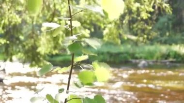 Leaves on the wind near the river — Stock Video