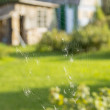 Summer village life and spiders web — Stock Photo