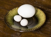 Eggs of parrot and chicken on the saucer — Stock Photo