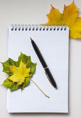 Notebook and autumn maple leaves — Stock Photo