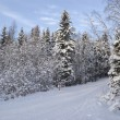 Stock Photo: Ski track in Russiforest