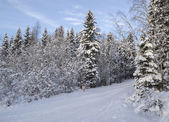 Ski track in Russian forest — Stock Photo