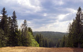 Forest hills landscape and cloudy sky — Stock Photo