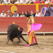 Torero Acho 2012 - Foto Stock