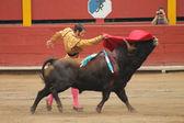 Torero Acho 2012 — Stock Photo