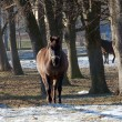 Stock Photo: Horse on paddock