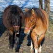 A pair of horses on the paddock — Stock Photo