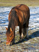 A brown horse on the paddock — Stock Photo