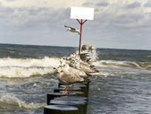 Seagulls on the mole with white board during windy weather — Stock Photo