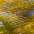 Fall Leaves Blur — Stock Photo