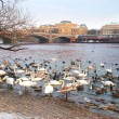 Birds on the embankment in Prague, Czech republic — Stock Photo