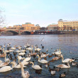 Birds at riverside of Vltava against old Prague, Czech republic — Stock Photo