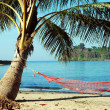 Hammock under a palm tree on the beach — Stock Photo