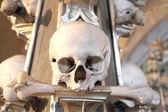 Crânios e ossos humanos — Foto Stock