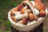 Basket with wild forest mushrooms — Stock Photo