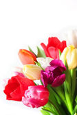 Colorful bouquet of tulip flowers on white background — Stock Photo