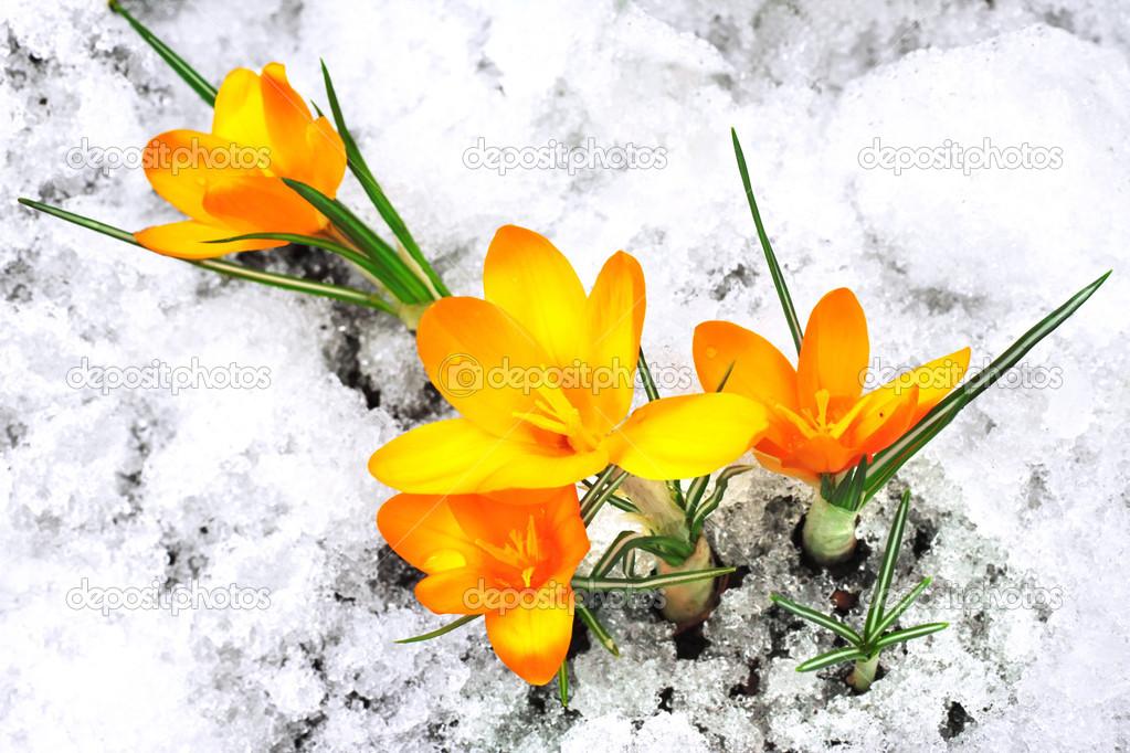 Песня снег идет белым звездочкам в буране