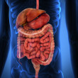 3D Rendering Intestinal internal organs - Foto Stock