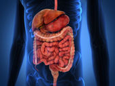 3D Rendering Intestinal internal organs — 图库照片