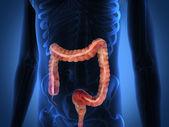 O corpo humano por raios-x. — Foto Stock
