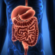 Rendering Intestinal internal organs — Foto Stock