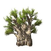 Arbre baobab isolé. illustration vectorielle — Vecteur