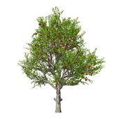 Apple tree isolated. Vector illustration — Stock Vector