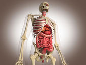 3D Rendering Intestinal internal organ — Stock Photo