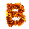 Fall alphabet letter B — Stock Photo