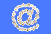 Camomile flower symbol — Stock Photo
