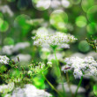 Green Wild Flowers Background — Stock Photo