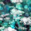 Blue Wild Flowers Background — Stock Photo