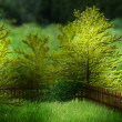 Garden Premade Background - Stock Photo