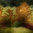 Autumn Garden Premade Background - Stock Photo
