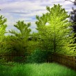 Green Garden Premade Background - Stock Photo