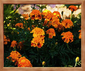Flowers Painted on Canvas — Stock Photo