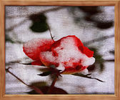 Rose Painted on Canvas — Stock Photo