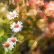 Flowers Bokeh Background — 图库照片
