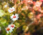 Flowers Bokeh Background — Stock Photo