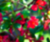 Blurry Flowers Background — Stock Photo