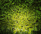 Fundo de natureza plantas — Foto Stock