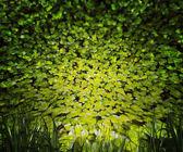 植物の自然の背景 — ストック写真