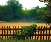 Natuur fantasie achtergrond — Stockfoto