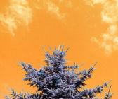 Yellow Sky Texture — Stock Photo