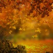 Autumn Background — Stock Photo #33566453