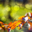 Autumn Leaves Bokeh — Foto de stock #34411655