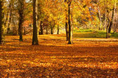 Gold Autumn in the Park — Stock Photo